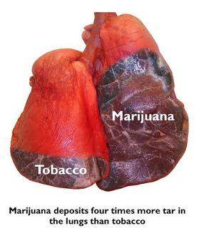 marijuana lungs tar