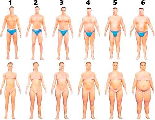 body fat type chart for drug test calculator