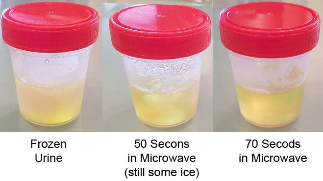 urine in microwave